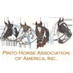 Pinto-Horse-Association