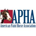 american-paint-horse-association