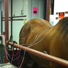 Equine acupunture services at Burleson Equine Hospital